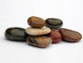 Sarasota Zen Study Group meditation