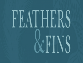 Feathers & Fins