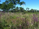 Birding Diversity at T. Mabry Carlton, Jr. Memorial Reserve