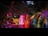 Selby Gardens Lights in Bloom
