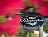 Sarasota Sunday Pro Blues Jam